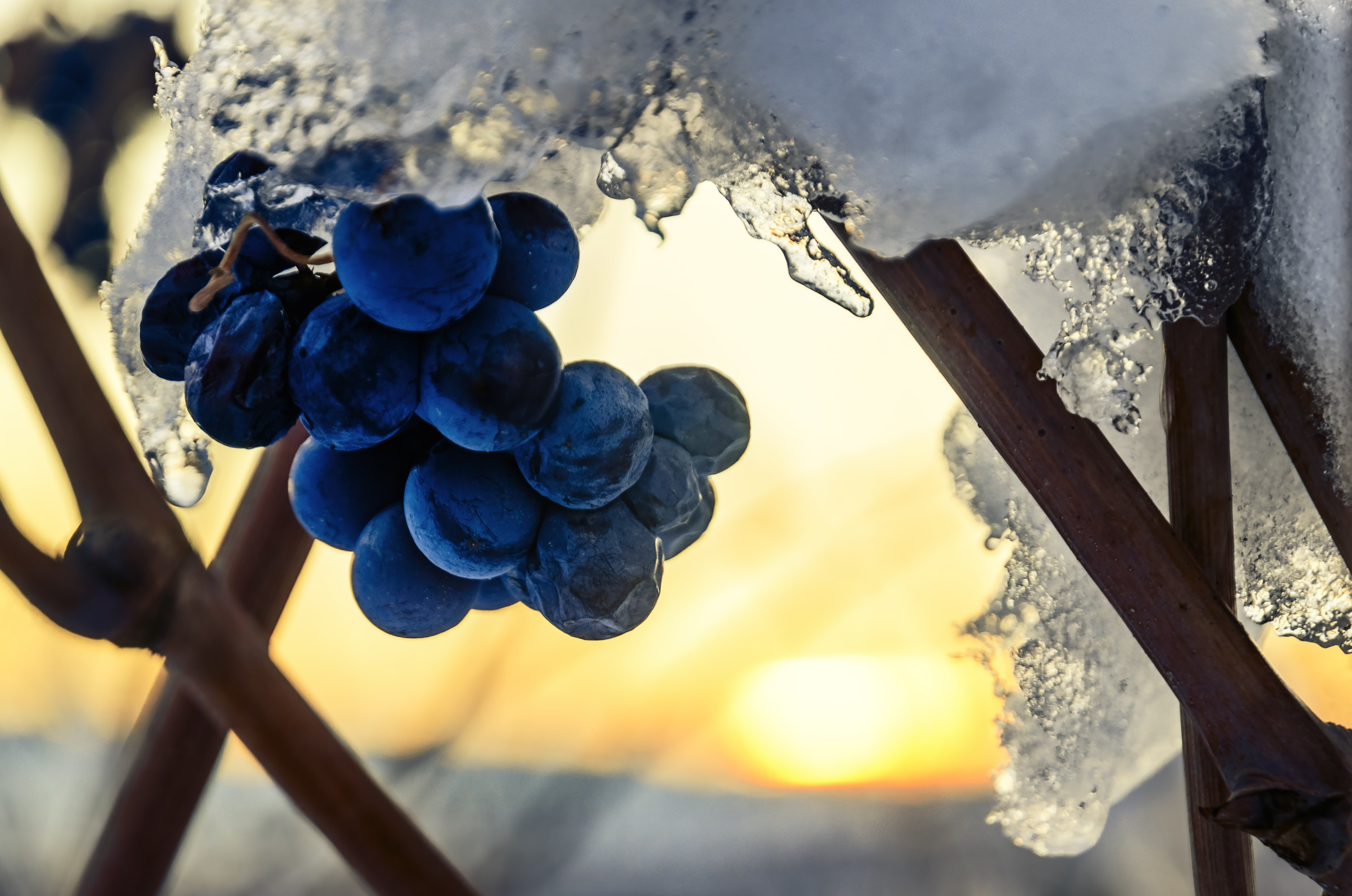 Wine Women Wills - Winter Favorites
